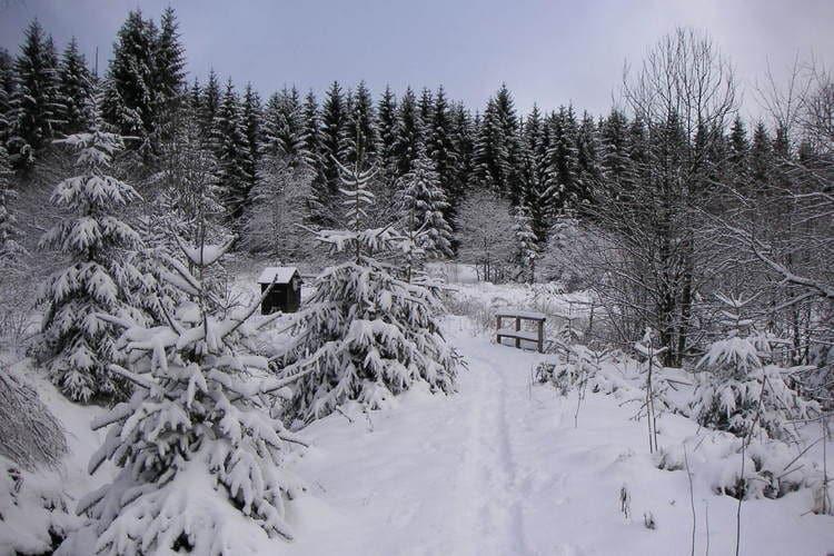 VakantiehuisDuitsland - Harz: Ferienpark am Waldsee 2  [40]