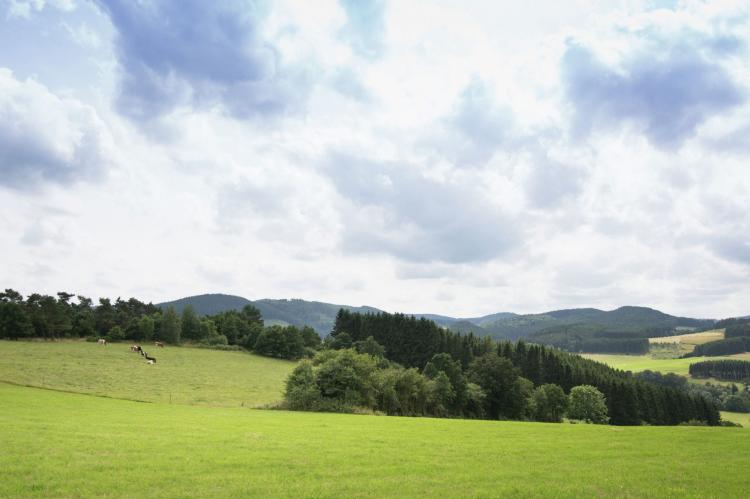 VakantiehuisDuitsland - Hessen: Hülsemann  [25]