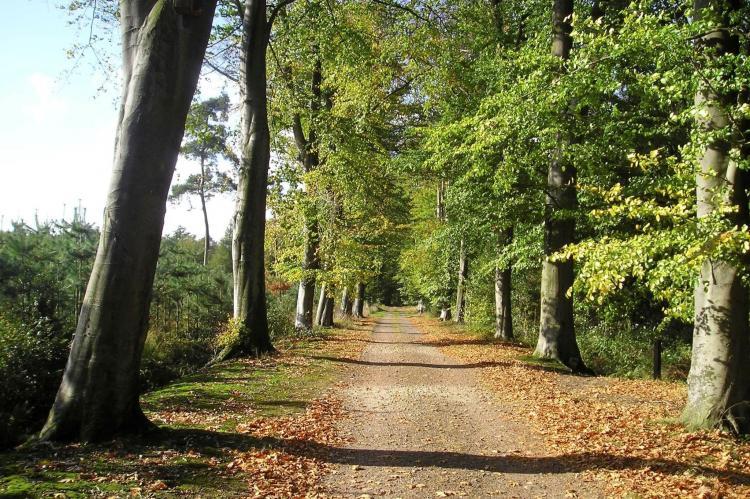 VakantiehuisDuitsland - Niedersaksen: Ferienresort Bad Bentheim 16  [31]