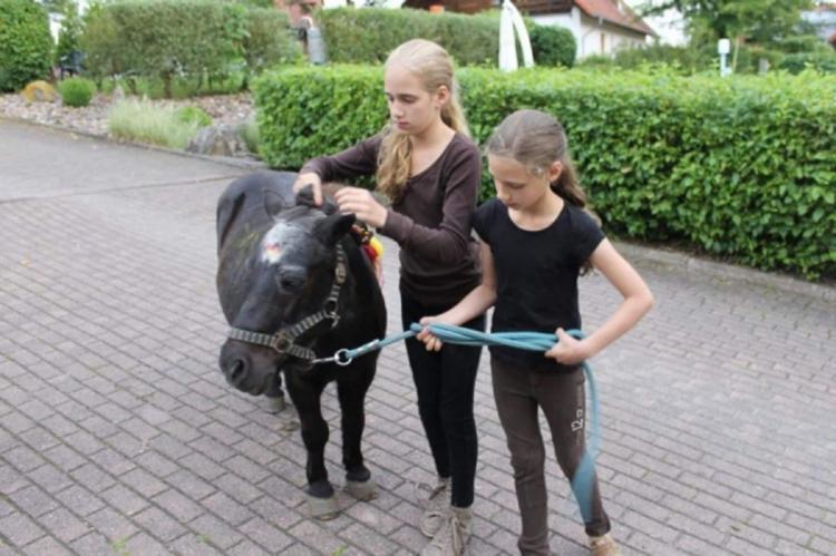 Holiday homeGermany - North Rhine-Westphalia: Feriendorf Natur pur 4  [9]