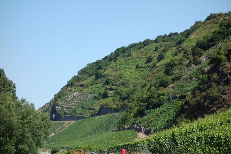 Holiday homeGermany - Rhineland-Palatinate: Sonne  [23]