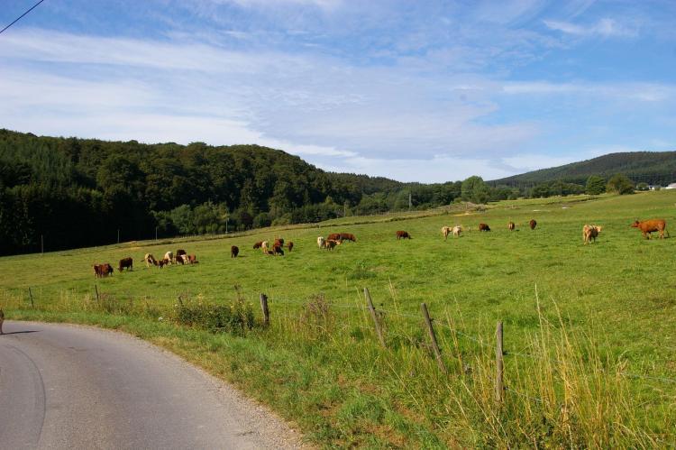VakantiehuisDuitsland - Rheinland-Pfalz: De Smaragd  [23]