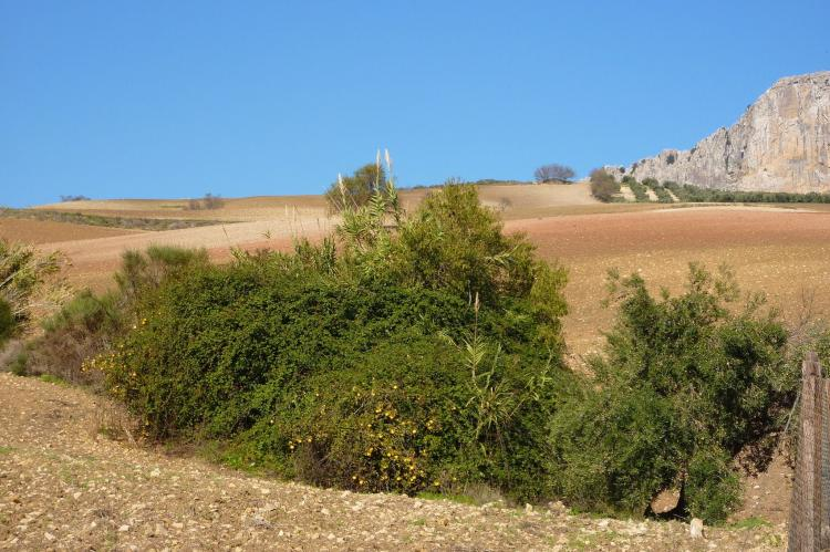 Holiday homeSpain - Andalusia Inland: El Trigal  [29]