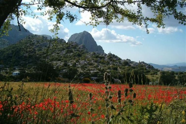 VakantiehuisSpanje - Andalusië Binnenland: Cortijo Los Alazores  [19]