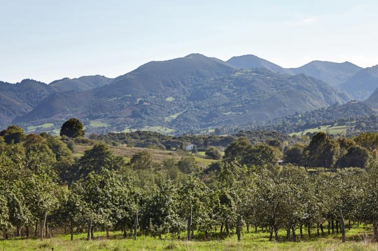 FerienhausSpanien - Asturien: Pruneda I  [5]