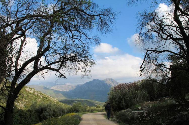 Holiday homeSpain - Andalusia Inland: Carmela  [29]