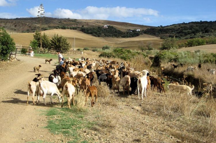 VakantiehuisSpanje - Andalusië Binnenland: Villa Sol  [33]