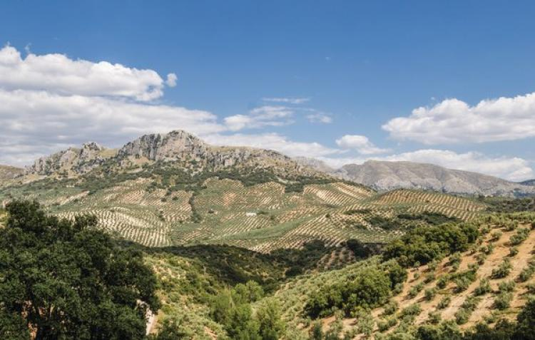 FerienhausSpanien - Andalusien Innenland: Rute  [28]