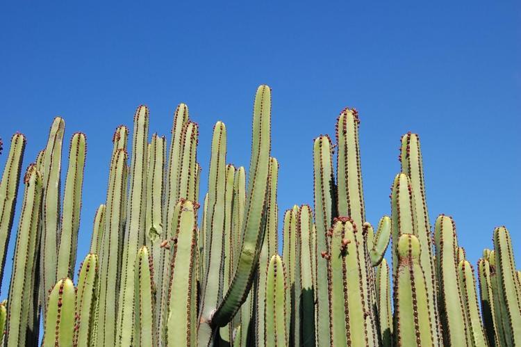 Holiday homeSpain - Canary Islands: Villa Las Terrazas 21  [36]