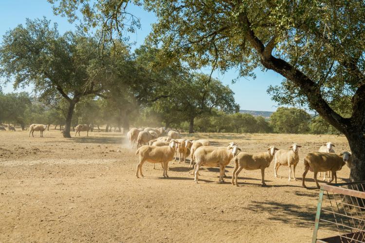VakantiehuisSpanje - Extremadura: Malvarrosa  [27]