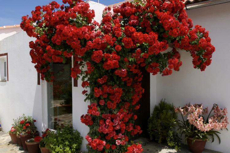 Holiday homeSpain - Andalusia Inland: Casa Candela  [2]