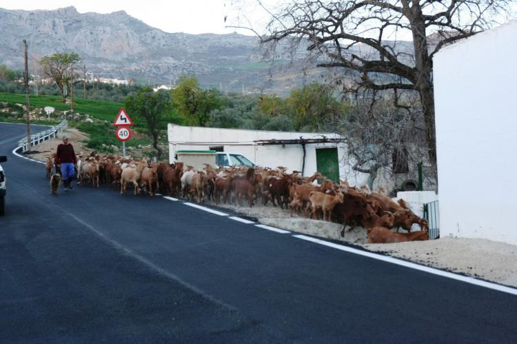 FerienhausSpanien - Andalusien Innenland: Casa Torrejón  [22]