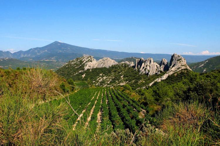 Holiday homeFrance - Provence-Alpes-Côte d'Azur: Romarin  [22]