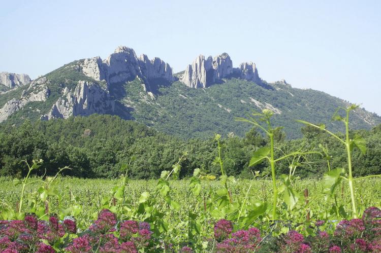 Holiday homeFrance - Provence-Alpes-Côte d'Azur: Romarin  [25]
