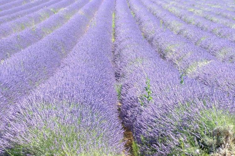 Holiday homeFrance - Provence-Alpes-Côte d'Azur: Romarin  [28]