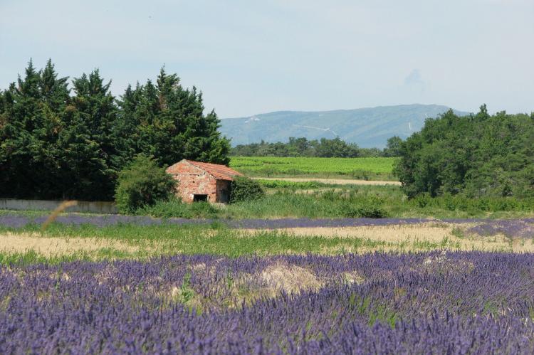 Holiday homeFrance - Provence-Alpes-Côte d'Azur: Romarin  [18]