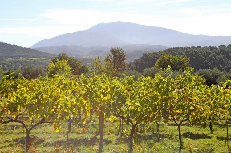 Holiday homeFrance - Provence-Alpes-Côte d'Azur: Mas le Cèdre  [32]
