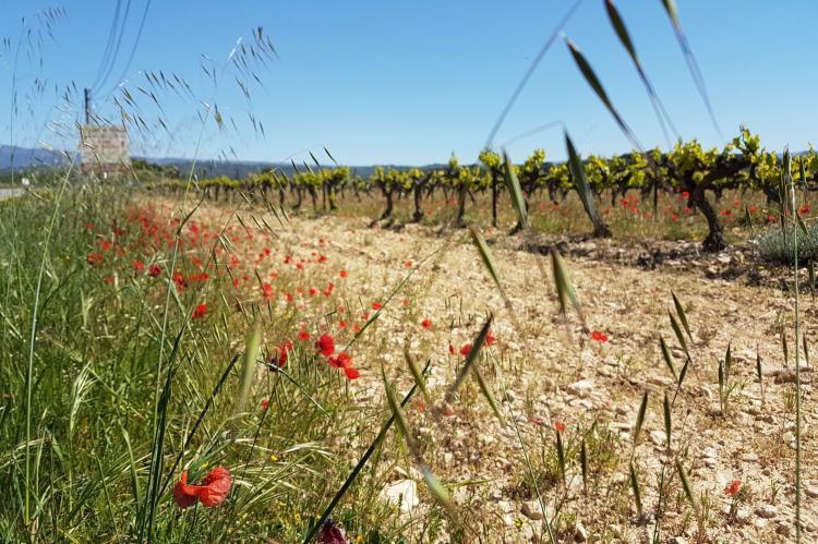 Holiday homeFrance - Provence-Alpes-Côte d'Azur: villa Fourniguières  [39]