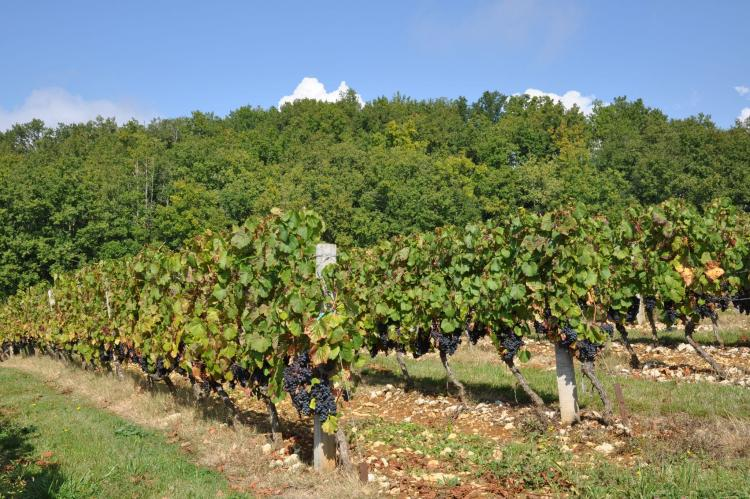 VakantiehuisFrankrijk - Midi-Pyreneeën: Villa Le Houga  [31]
