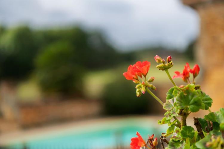 Holiday homeFrance - Dordogne: Maison fabuleuse  [29]