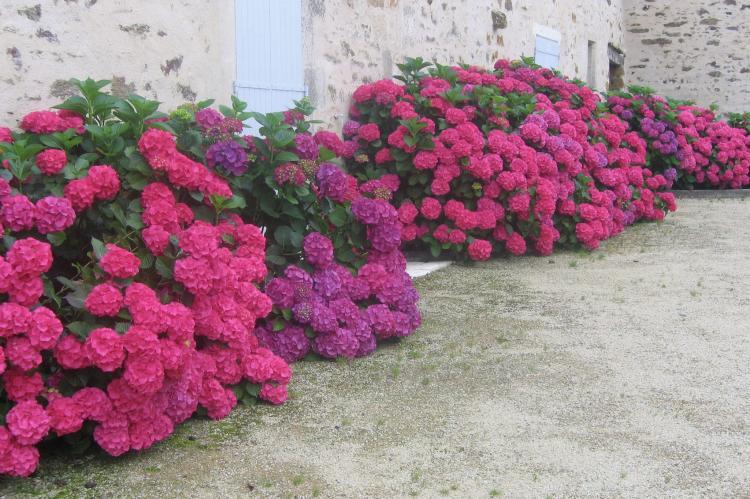 Holiday homeFrance - Loire: La Tour  [31]