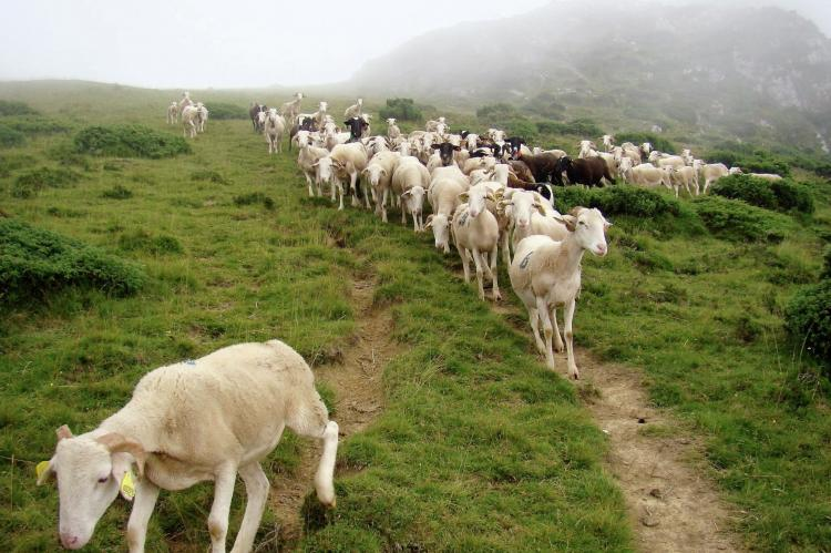 VakantiehuisFrankrijk - Midi-Pyreneeën: Gîte Marque  [33]