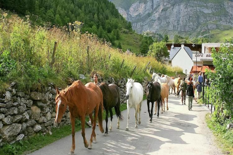 VakantiehuisFrankrijk - Midi-Pyreneeën: Gîte Marque  [36]