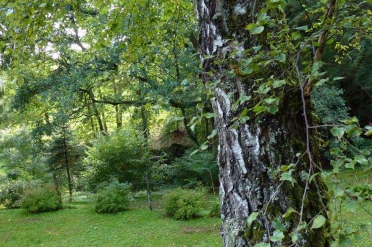 Holiday homeFrance - Lorraine: Remschweiler  [7]