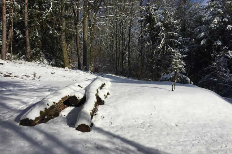 Holiday homeFrance - Lorraine: Remschweiler  [36]