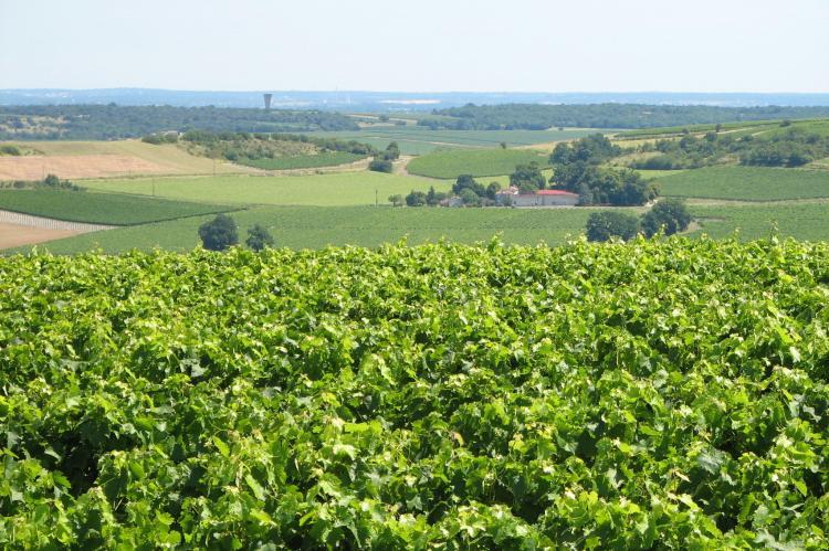 Holiday homeFrance - Poitou-Charentes: Cottage Côte Atlantique  [31]