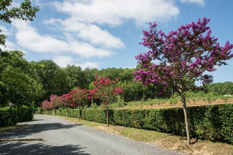 Holiday homeFrance - Dordogne: Parc Les Marrons 5 pers Tulipe  [31]