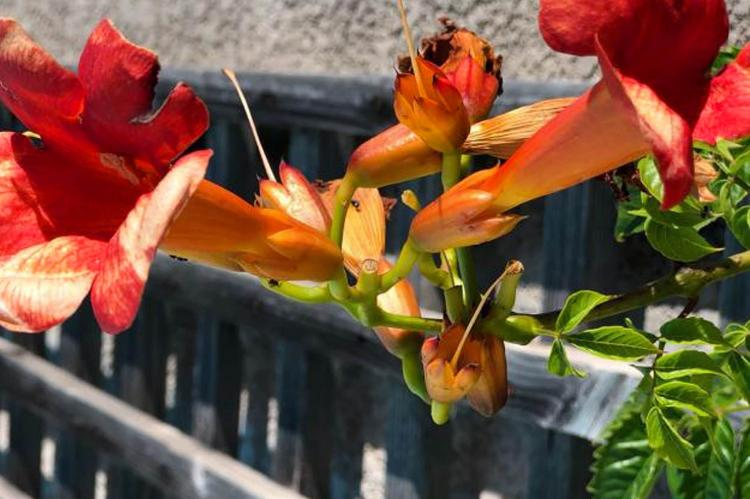 Holiday homeFrance - Languedoc-Roussillon: Villa Le Palatin  [37]