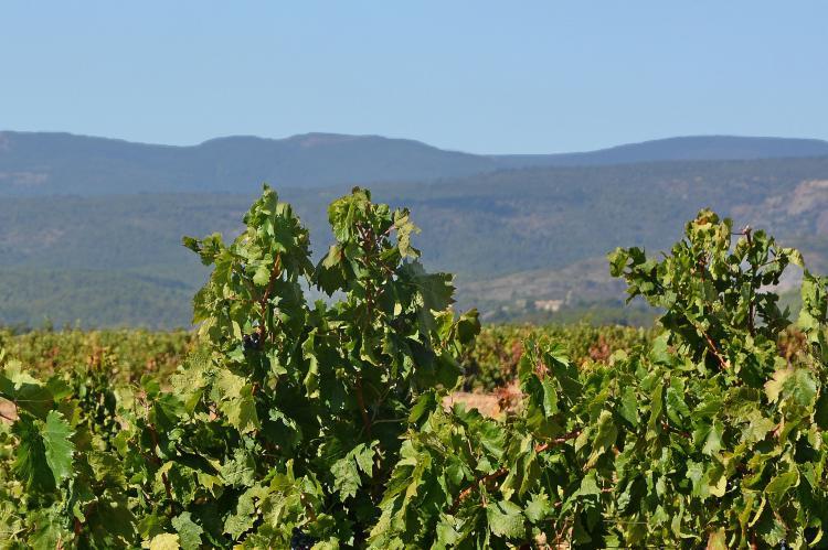 Holiday homeFrance - Languedoc-Roussillon: Villa Le Palatin  [28]