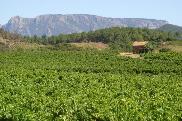 Holiday homeFrance - Languedoc-Roussillon: Les Mûriers  [25]