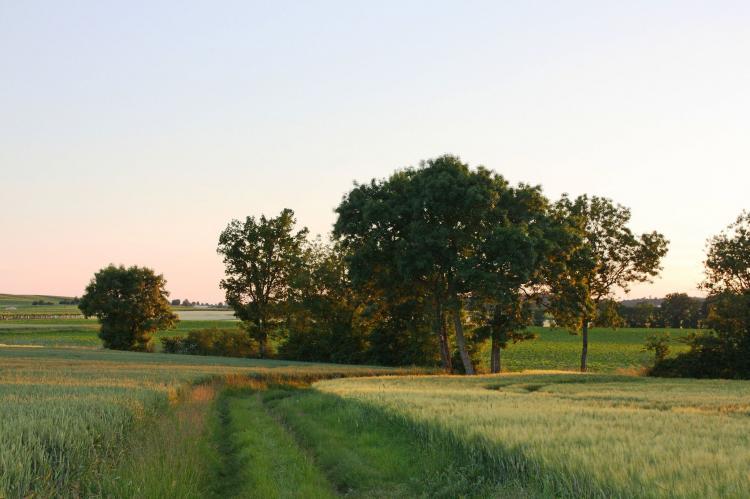 Holiday homeFrance - Poitou-Charentes: Villa Petite Champagne  [21]