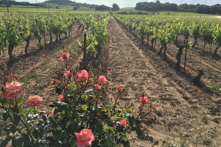 Holiday homeFrance - Languedoc-Roussillon: Villa Le Chardonnay  [23]