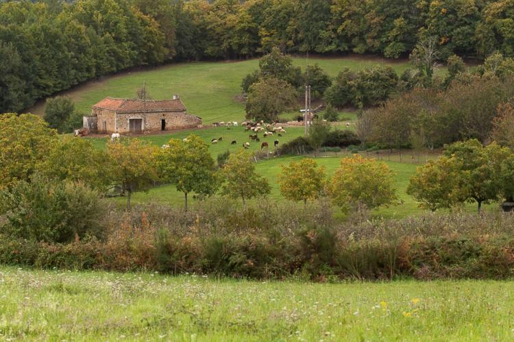 Holiday homeFrance - Dordogne: Le petit Nichoir  [9]