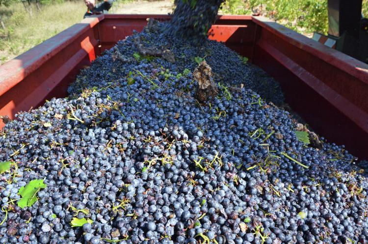VakantiehuisFrankrijk - Languedoc-Roussillon: Gîte de luxe dans les vignes 4  [36]