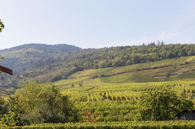 Holiday homeFrance - Alsace: Magnifique Appartement Alsacien  [45]
