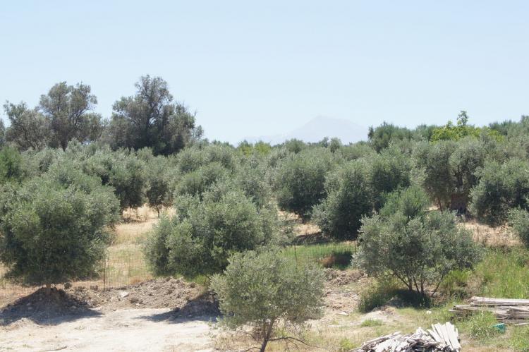VakantiehuisGriekenland - Kreta: Villa Pelagia  [30]