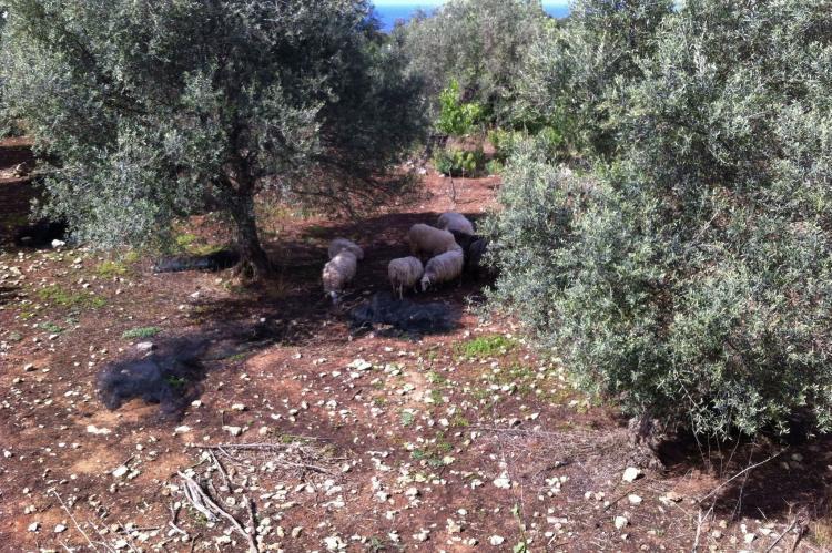 VakantiehuisGriekenland - Kreta: Villa Eleonora  [33]
