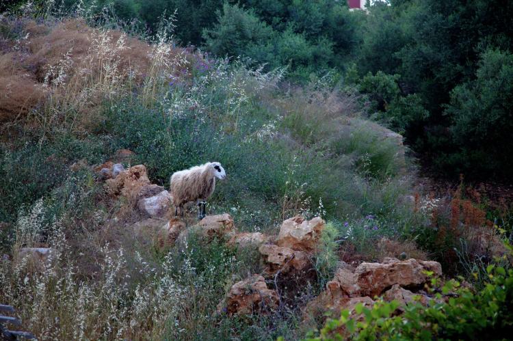VakantiehuisGriekenland - Kreta: Villa Eleonora  [25]