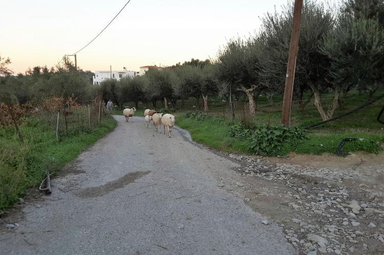 Holiday homeGreece - Crete: Villa Estia  [24]