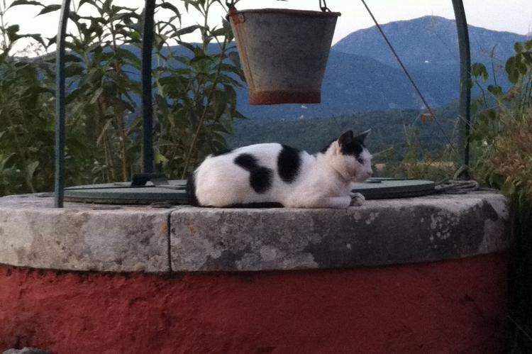 Holiday homeGreece - Corfu: Fundana Studio  [15]