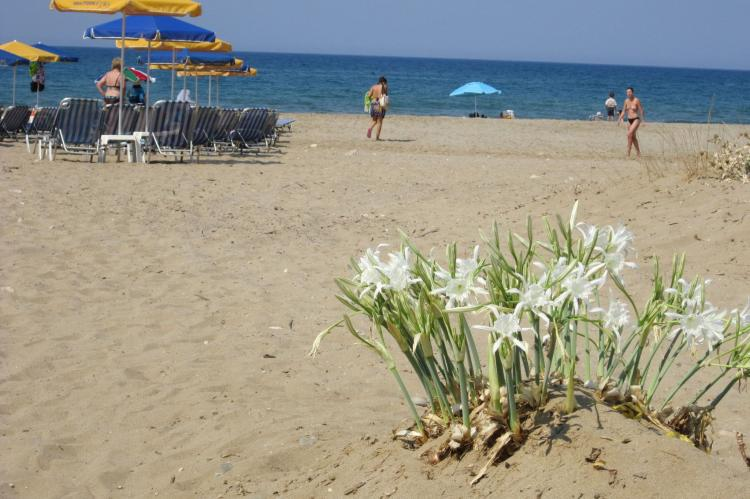 Holiday homeGreece - Crete: Villa Cocoon  [51]