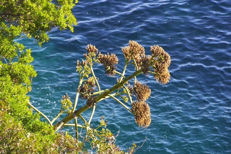 VakantiehuisKroatië - Zuid Dalmatië: Apartment Tonicas  [34]