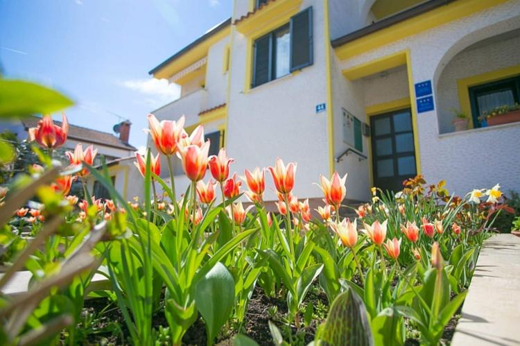 Holiday homeCroatia - Istra: Apartment Matosevic II mit Balkon in der Nähe des   [2]