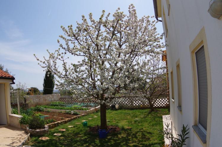 VakantiehuisKroatië - Istrië: House Mia  [33]