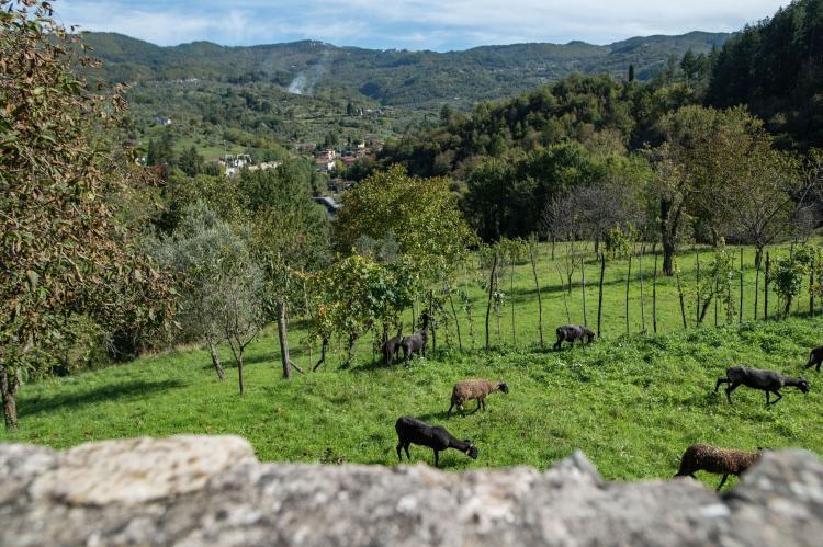 Holiday homeItaly - Tuscany/Elba: Castello di Pratogrande 1  [36]