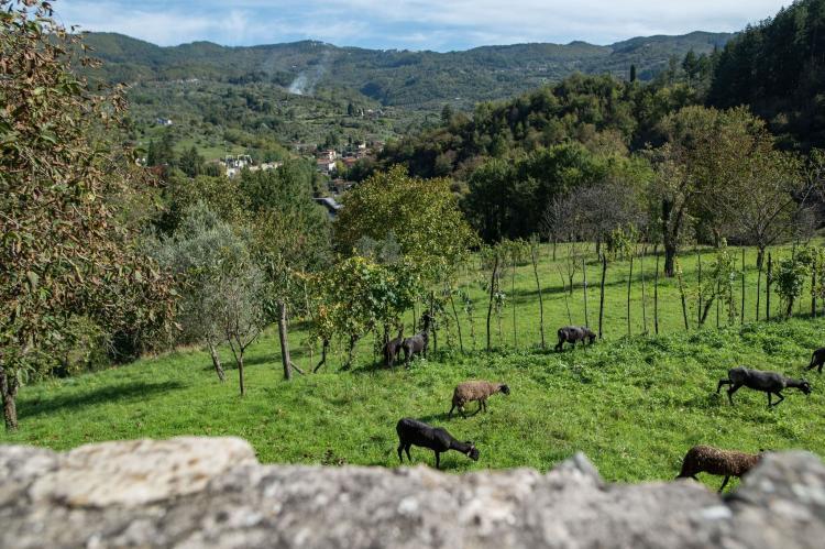 Holiday homeItaly - Tuscany/Elba: Castello di Pratogrande 2  [33]